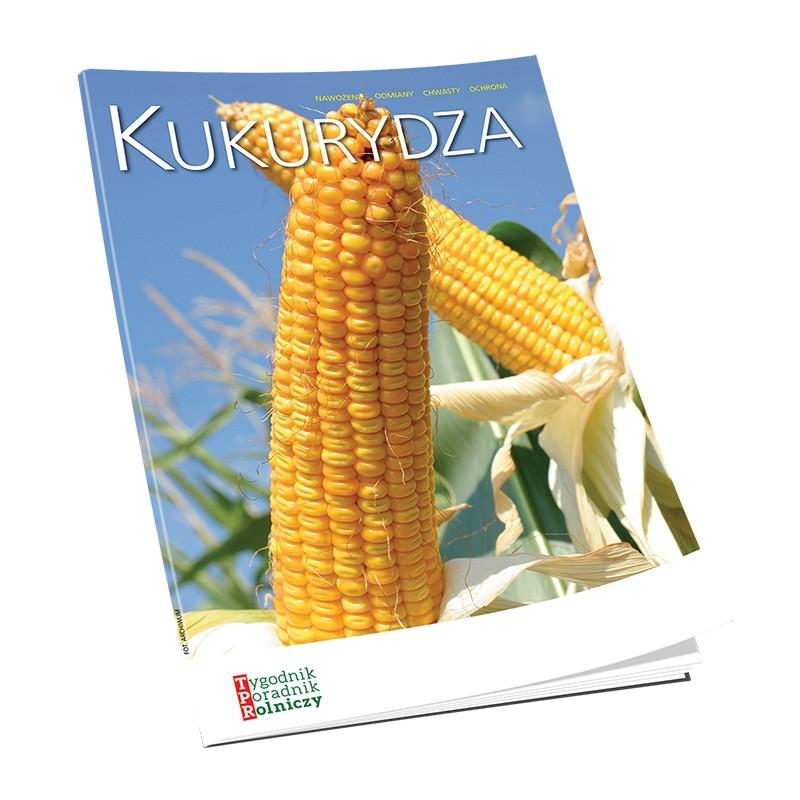 Kukurydza – nawożenie, odmiany, chwasty, ochrona