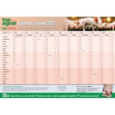 Kalendarz rujowy świń 2021