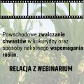 Powschodowe zwalczanie chwastów w kukurydzy oraz sposoby nalistnego wspomagania roślin - relacja z webinarium